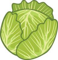 ícone de vetor de repolho verde