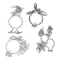 desenho vetorial de romã em preto e branco vetor