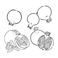 mão ilustrações desenhadas. desenho vetorial preto e branco. afogamento altamente deteiled da granada. desenho vetorial de granada em um fundo branco vetor
