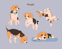 várias poses do bonito beagle. mão desenhada estilo ilustrações vetoriais. vetor