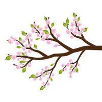 flor de cerejeira sakura flor folha galho de árvore vetor