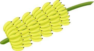 cacho de banana isolado estilo cartoon sobre fundo branco vetor