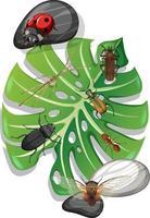 vista superior de muitos insetos na folha de monstera isolada vetor