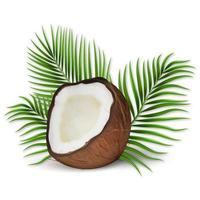 Conjunto de vetores realistas 3D de coco e folhas de palmeira