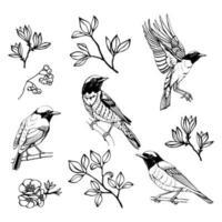 mão desenhado conjunto de pássaros e flores. desenho de esboço. ilustração vetorial. Preto e branco. vetor