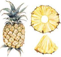 conjunto de abacaxi aquarela vetor