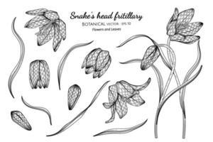 conjunto de flor e folha fritilar de cabeça de cobra mão desenhada ilustração botânica com arte em fundo branco. vetor