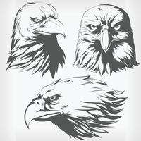 silhueta águia cabeça falcão falcão estêncil frente lateral desenho vetor