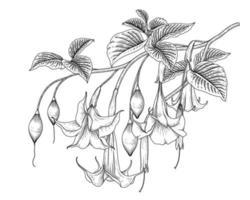flor de trombeta de anjo ou ilustrações de esboço desenhado à mão de brugmansia vetor