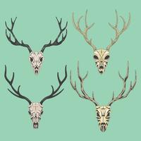 Conjunto bela ilustração detalhe de um crânio de veado