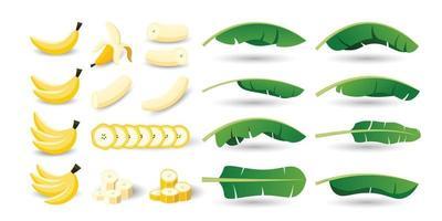 conjunto de frutos e folhas de bananeira vetor