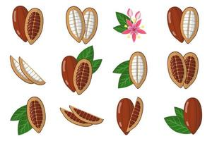 conjunto de ilustrações com frutas exóticas de cacau, flores e folhas isoladas em um fundo branco. vetor