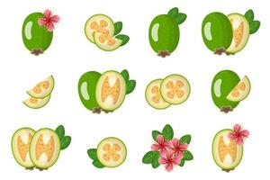 conjunto de ilustrações com frutas exóticas, flores e folhas isoladas em um fundo branco. vetor