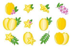 conjunto de ilustrações com frutas exóticas carambola, flores e folhas isoladas em um fundo branco. vetor