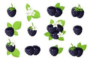 conjunto de ilustrações com frutas exóticas de amora-preta, flores e folhas isoladas em um fundo branco. vetor