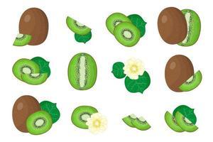 conjunto de ilustrações com frutas exóticas de kiwis, flores e folhas isoladas em um fundo branco. vetor