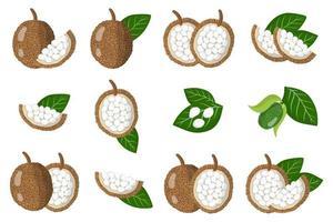 conjunto de ilustrações com frutas exóticas marang, flores e folhas isoladas em um fundo branco. vetor