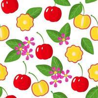 padrão sem emenda de desenho vetorial com acerola frutas exóticas, flores e folhas em fundo branco vetor