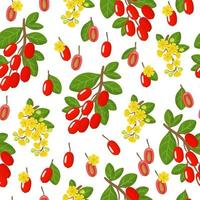 padrão sem emenda de desenho vetorial com berberis vulgaris ou frutas exóticas de bérberis, flores e folhas em fundo branco vetor