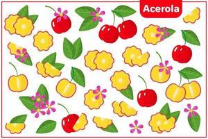 conjunto de ilustrações de desenho vetorial com frutas exóticas de acerola, flores e folhas isoladas no fundo branco vetor