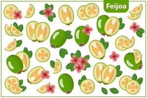 conjunto de ilustrações de desenho vetorial com feijoa, frutas exóticas, flores e folhas isoladas no fundo branco vetor