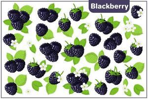 conjunto de ilustrações de desenho vetorial com frutas exóticas de amora-preta isoladas no fundo branco vetor