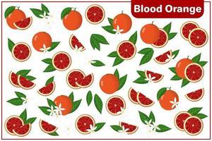 conjunto de ilustrações de desenho vetorial com frutas exóticas inteiras, meio cortadas, de laranja sanguínea, flores e folhas isoladas no fundo branco vetor