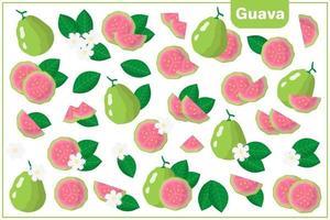 conjunto de ilustrações de desenho vetorial com goiaba frutas exóticas, flores e folhas isoladas no fundo branco vetor