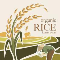 ilustração vetorial de arroz vetor