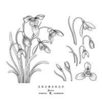 esboço conjunto decorativo floral. desenhos de flores de floco de neve. preto e branco com arte isolada em fundos brancos. mão desenhada ilustrações botânicas. vetor de elementos.
