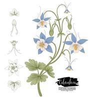 esboço conjunto decorativo floral. desenhos de flores columbinas. arte de linha vintage isolada em fundos brancos. mão desenhada ilustrações botânicas. vetor de elementos.