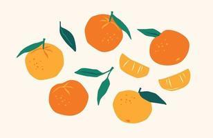 conjunto de tangerinas desenhadas. frutas cítricas, laranjas, mantarinas. ilustração vetorial. elementos isolados vetor
