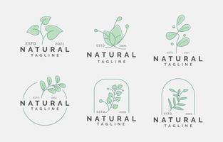 modelo de logotipo de beleza natural vetor