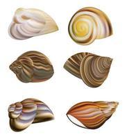 vetor de conchas de caracol