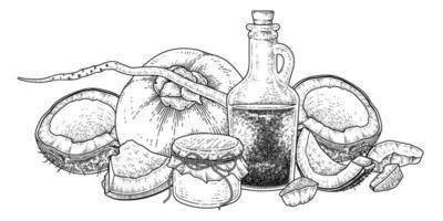meia concha inteira carne e óleo de coco ilustração vetorial desenhada à mão vetor