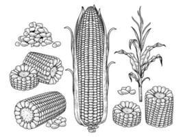 conjunto de ilustração desenhada à mão de milho vetor