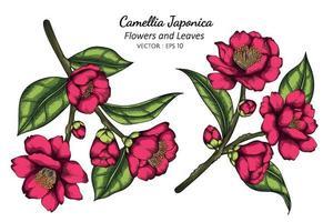 rosa camélia japonica flor e folha desenho ilustração com linha artística em fundo branco. vetor