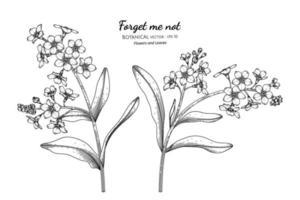 esqueça-me, não flor e folha mão desenhada ilustração botânica com arte de linha. vetor