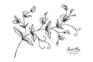 ervilhas-de-cheiro flor e folha mão desenhada ilustração botânica com arte de linha. vetor