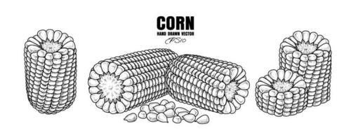 conjunto de milho maduro ilustração desenhada à mão vetor