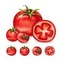 Aquarela De Tomate vetor
