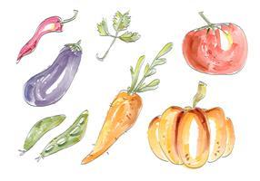 Legumes em Aquarela Vector Set Ilustração