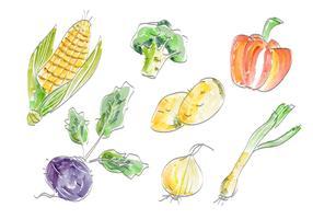 Legumes frescos Vector Set ilustração em aquarela