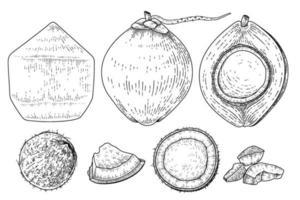 conjunto de estilo retro de ilustração vetorial desenhada de mão de coco. inteiro, meio, casca e carne de coco. vetor