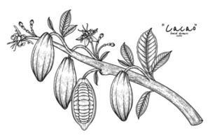 ramo de cacau com ilustração de frutas mão desenhada vetor