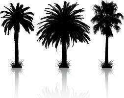 Silhuetas de palmeira vetor
