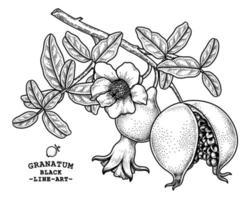 ilustração retro desenhada à mão da fruta da romã vetor