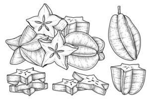conjunto de carambola ou carambola elementos desenhados à mão ilustração botânica vetor