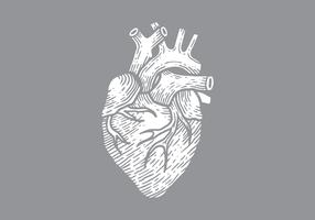 Ilustração em vetor coração humano