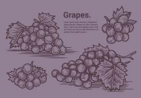 Ilustração vetorial de uvas vetor